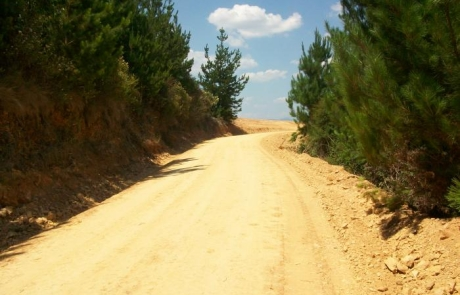 FOREST OPERATIONS AT MYSTIC – ROADING WORKS
